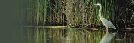 Image of Wetland Area